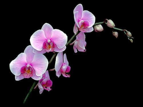 Hướng dẫn thay giá thể trồng lan » Hoa lan sưu tầm